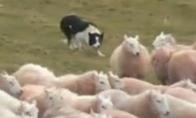 Avių menas