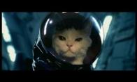 Astro katinas