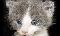 Labai juokingos katės 27