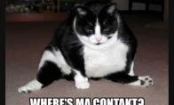 Labai juokingos katės 28