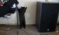 Katė ir lazeris