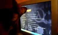 Šuo gaudo pelę monitoriaus ekrane