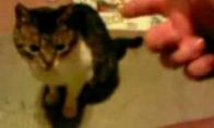 Ranka nušauna katę