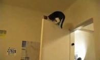 Nindzinės katės