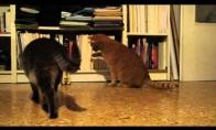 Ritmingas katinas