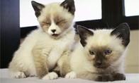 Mieli kačiukai