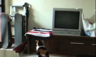 Neryžtingas katinas