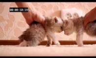 Kačiukų avarija