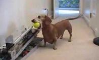 Savarankiškas šuo