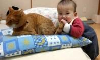 Kantriausias katinas pasaulyje