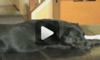 Nematomos katės