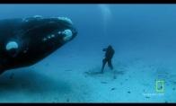 Pasimatymas su banginiu