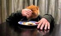 Rankuotas katinas