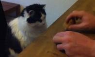 Azartiškas katinas