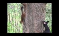 Voverė vizgina šunį