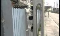 Čako Noriso šuo