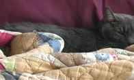 Makgaiverio katė