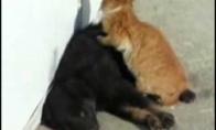 Katiniškas masažas