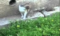 Kačių siaubas