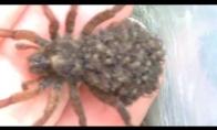 Voras iš... vorų