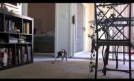 Naminių gyvūnų kankinimas