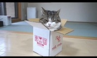 Maru dėžėje