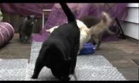 Katės išminuotojos