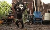 Beždžionė su kalašnikovu