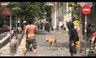 Graikijos riaušių šuo