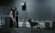 Kaip išgąsdinti šunį