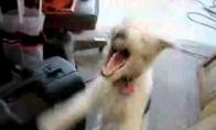 Helio šuo