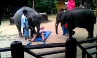 Patvirkę drambliai