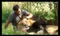 Žmogus liūtas