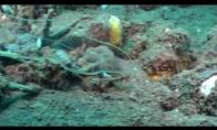 Prezikas jūros dugne