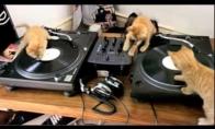 DJ Katukai