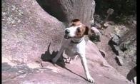 Šuo alpinistas