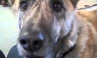 Kalbantis šuo