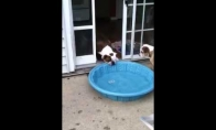 Gusas ir baseinas