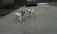Šuniukas lavoniukas