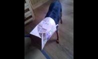 Kaip išjungti šunį