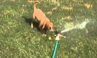 Šuniukas VS Purkštukas