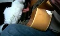 Gitaristo katinas
