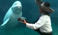 Serenada delfinui