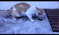 Žiauriai protinga katė