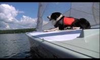Šuo-jūreivis