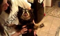 Šėtono šuo