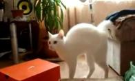 Išėjo katuko sesutė