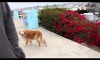 Forever Alone šuniukas