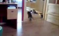 Kačių Driftas