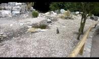 Forever alone pingvinas